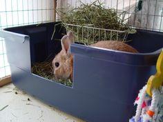 Ide til toilet, til en kanin der har det med at grave indholdet over kanten. Huskaniner, kaninhåndbogen