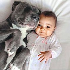 Uplifting So You Want A American Pit Bull Terrier Ideas. Fabulous So You Want A American Pit Bull Terrier Ideas. So Cute Baby, Beautiful Dogs, Animals Beautiful, Cute Baby Animals, Funny Animals, Cute Puppies, Cute Dogs, Puppies Puppies, Nanny Dog