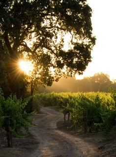The travel hotspot on my wish list- Sonoma wine country New Travel, Travel Goals, Sonoma Wineries, Sonoma Wine Country, In Vino Veritas, California Dreamin', Northern California, Sonoma County, Vacation Spots