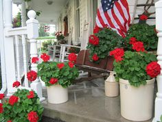 Love these red geraniums in white jugs for summer or patriotic decor via deppenhomestead1862.