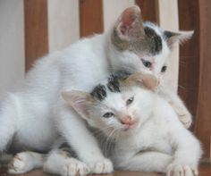 I love my sibling, though sometime we have quarrel :) *Popov and Yuri*