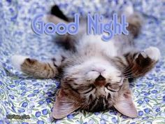 Good Night Glitter Graphics | for forums: [url=http://www.imagesbuddy.com/good-night-kitten-graphic ...