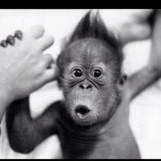 Oh my goodness... I want a monkey.