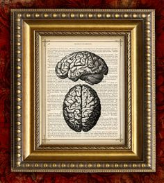 HUMAN BRAIN 1 Dictionary Art Print or Antique Book by EncorePrints, $10.00