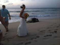 A really big sea turtle crashed a beach wedding. Why couldn't this have happened to me??!!