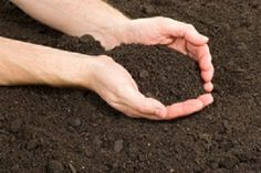 Why Soil Testing In Sunshine Coast Is Important Before Buying A Property | KC Blues Juke House