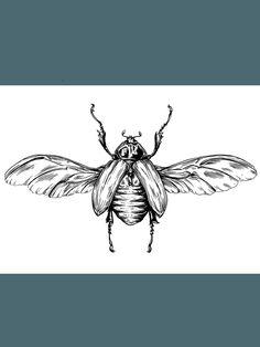 Scarab-Beetle-shop