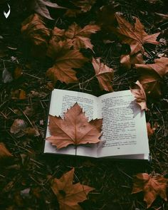 Fall Reading - Foto Home Autumn Photography, Book Photography, Creative Photography, Autumn Aesthetic Photography, Autumn Aesthetic Tumblr, Fall Pictures, Fall Photos, Book Aesthetic, Aesthetic Pictures