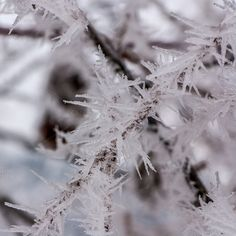 Frozen crystals by ChristianThür Photography on @creativemarket