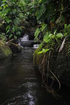 Santo Tomas, Cusuco National Park, 2010, by Andrew M.Snyder