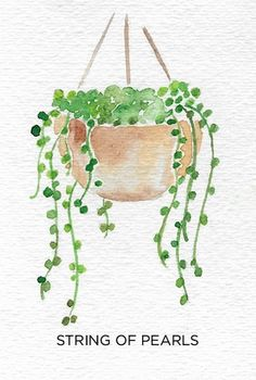 Plants and greenery add life to a home. Learn how to add indoor plants into your decor and how to keep them alive even if you don't have a green thumb. Art A Guide to Caring for Easy to Grow Indoor Plants Watercolor Paintings For Beginners, Easy Paintings, Watercolor Techniques, Simple Watercolor Paintings, Paintings Famous, Beginner Painting, Indian Paintings, Canvas Paintings, Famous Artists