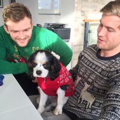Throwback: We have an #officedog for the day. Even Otto is rocking his #christmasjumper  Have a great day everybody!  #dogsofinstagram #dogs #christmas #christmasjumperday