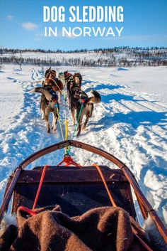 Dog sledding in Tromso, Norway, is an adventure. Drive the team of Alaskan huskies yourself or go along for the ride on this great activity in northern Norway. P.S., you can also play with puppies.
