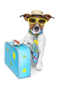 5 Things To Pack In You Dog's Bag On Car Trips