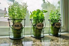Growing Your Own Herbs Indoors