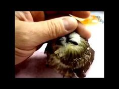 Videos - YouTube Bird, Youtube, Animals, Videos, Owls, Animales, Animaux, Birds, Video Clip
