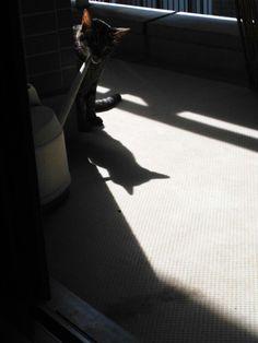 shadow of  cat