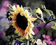 Goldfinch on sunflower painting by Terry Issac