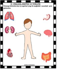 preschool internal organs male- okul öncesi iç organlarımız erkek our preschool internal organs are male, - Body Parts Preschool, Preschool Worksheets, Preschool Activities, Educational Activities, Body Parts Theme, 2d Shapes Activities, All About Me Preschool, Human Body Organs, Kindergarten Learning