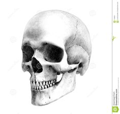 human skull drawing | Human Skull - Three-Quarter-View - Pencil Drawing Style - This is a 3D ...