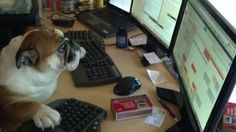 """This dog who has literally never used a computer in his entire life so he's like """"WHAT."""" 