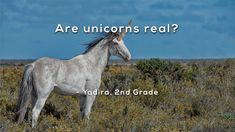 """Are your kids wondering: """"Are unicorns real?"""" This question came from Yadira, a Grader from the US. Like, share and vote on next week's question here: ht. Unicorn Images, Mystery Science, What Is Science, Unicorn Crafts, Next Week, Science And Technology, Unicorns, Animals, Youtube"""