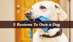 Reasons To Own a Dog - The saying that a dog's man's best friend goes a long way to all the benefits of owning a dog that stand out. Dogs offer more than