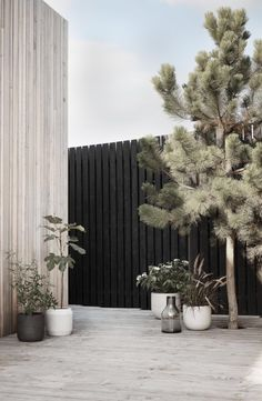 Minimalist garden with large potted plants and black fences. Minimalist garden with large potted plants and black fences.