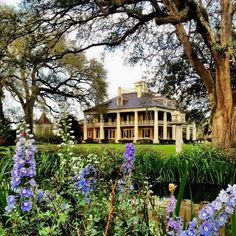 The classic Southern plantation house with its columns and balcony still exists, though largely as museums or hotels. This is the Houmas House Plantation. Southern Plantation Homes, Southern Mansions, Southern Homes, Plantation Houses, Southern Charm, Country Homes, Southern Belle, Louisiana Plantations, Old Mansions