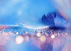 Niebieskie piórka wśród kropli Northern Lights, Celestial, Nature, Outdoor, Outdoors, Naturaleza, Nordic Lights, Aurora Borealis, Outdoor Games