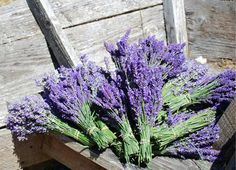 Fresh Lavender bunches from South 47 Farm in Redmond (blog.locallectual.com)