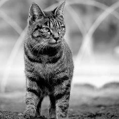 #りおん #Lumo #Vivi #Yui #れんくん#cat # kitten #kitty #gunma # maebashi #Japan #love #family # 3years old #boy #gingercat #grey #前橋猫 by naivayui
