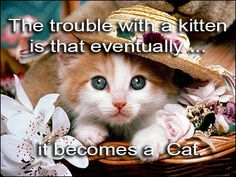 The trouble with a kitten is that eventually... #Cat #Litter
