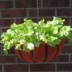 Gardening Tips for Container Gardening Want to do some gardening in your lawns and backyard but don't have much space. Do not worry, try container gardening and overcome this situation, it could be… Growing Lettuce, Growing Veggies, Hanging Planters, Planter Pots, Hanging Baskets, Fall Planters, Container Gardening Vegetables, Vegetable Gardening, Plants