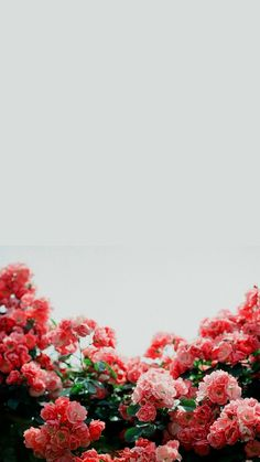 Sfondo per iPhone: Spring Symphony (marzo Iphone 6 Wallpaper Backgrounds, Frühling Wallpaper, Marble Iphone Wallpaper, Spring Wallpaper, Tumblr Backgrounds, Trendy Wallpaper, Pretty Wallpapers, Flower Backgrounds, Flower Wallpaper