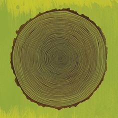 EVRT Studio - Tree Rings Print at 2Modern
