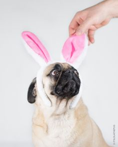 How dare you touching my funny bunny ears