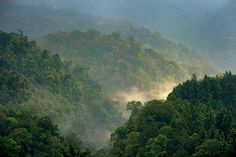 On forests' role in climate, New York Times op-ed gets it wrong | CIFOR Forests News Blog