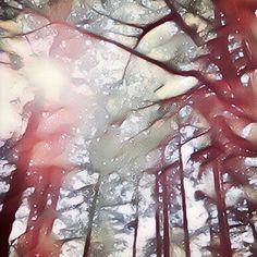 【a.tamayan】さんのInstagramの写真をピンしています。《* 様々な批判が出た昨年の紅白歌合戦でしたね〜。この際だから私的連動企画で敗れた方の雪景色風のpicもポストしちゃいます。  #三ツ寺公園 #林 #こもれび #雪景色  #ゆるりIGくらぶ #オリンパス倶楽部  #マイクロフォーサーズ #ズイコー  #オリンパス #OM_Dで撮ってみた  #実際には雪降っとらんのですが  #park #forest #sunshine #snow #snowscene #landscape  #olympus #om_d #omdem5markⅱ #microfourthirds #mzuiko #mzuiko14150mm  #ink361_asia #icu_japan #igs_asia #as_archive #screen_archive #team_jp_ #pics_jp》