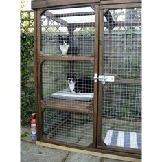 outdoor houses for cats | Katy Cat Run to give Cats fresh air safely outside