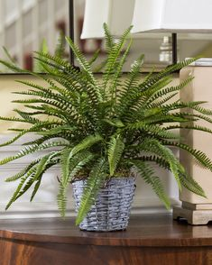 """{$tab:description} Natural beauty, unnatural longevity An airy, lacey, fern potted in a wicker covered metal planter that's ideal for tabletop, shelf, or mantle display. Best of all, this beautiful artificial plant is carefree - enjoy all its natural beauty without lifting a finger, or a green thumb. {$tab:DETAILS}        16"""" Height x 20"""" Width Rattan & Metal Pot -4.5""""H x 5.5""""Diameter """"Greenhouse Fresh"""" Appeal, Permanently Ideal Kitchen and Sunroom Accent Arrives Fully Shaped &..."""