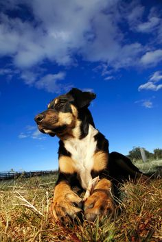 10 Tips To Keep Your Pet Happy & Healthy!