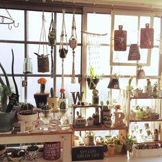 KiKiさんの、やらかし隊,水耕栽培初めました♪,出窓ディスプレイ,リメ鉢,リメ缶,NO GREEN NO LIFE,リビング,のお部屋写真