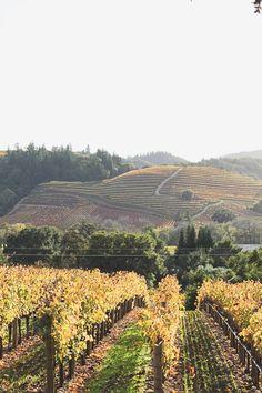 Top 5 Wine Regions Around San Francisco