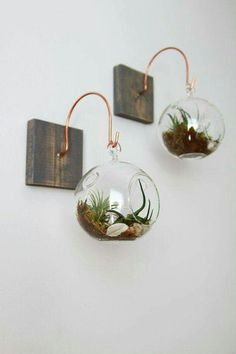 Learn how to make a hanging glass succulent terrarium There are different types of DIY succulent terrarium. A DIY terrarium can either be open or closed depending on your preference.