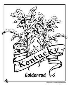 Kentucky State Unit Study - Geography  State Symbols  amp  FactsGoldenrod Coloring Page