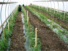 High Tunnel Agriculture is not as efficient as aquaponics.