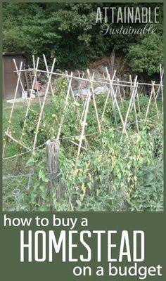 Dreaming of a homestead? Find out how to find and finance yours on a budget!