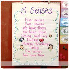 Teaching five senses unit on pinterest anchor charts first grade