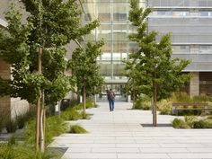 UCSF Cardiovascular Research Building by Andrea Cochran Landscape Architecture